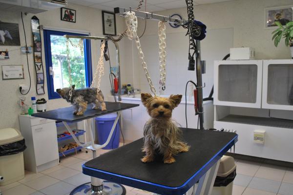 Pension la roque salon for Salon toilettage
